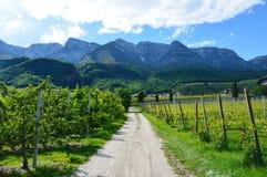 Piantagione dell'uva vicino al lago Caldaro a Bolzano/Bozen, Italytower nella città di Brescia, Lombardia Italia Fotografia Stock Libera da Diritti