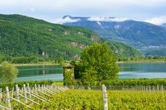 Piantagione dell'uva vicino al lago Caldaro a Bolzano/Bozen Sudtirol, Italia Immagine Stock Libera da Diritti