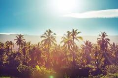 Piantagione della palma Immagine Stock