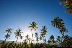 Piantagione della palma Fotografie Stock