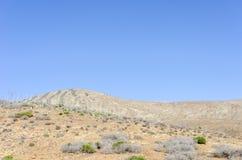 Piantagione della pianta medicinale in isole Canarie, S di vera dell'aloe Immagine Stock