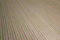 Piantagione della soia Vista aerea di soia agricola coltivata Fotografie Stock Libere da Diritti