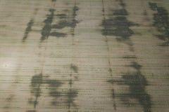 Piantagione della soia Vista aerea di soia agricola coltivata Fotografia Stock