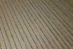 Piantagione della soia Vista aerea di soybe agricolo coltivato Fotografie Stock