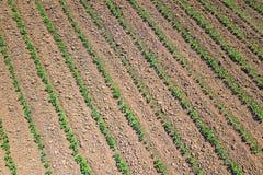 Piantagione della soia Vista aerea di soybe agricolo coltivato Fotografia Stock Libera da Diritti