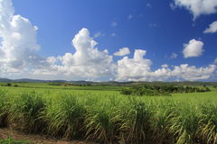 Piantagione dello zucchero in Cuba Fotografie Stock