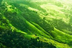 Piantagione di agricoltura sulla montagna al phartang di Doi, chiangra Fotografie Stock