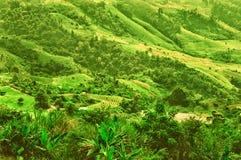 Piantagione di agricoltura sulla montagna al phartang di Doi, chiangra Fotografie Stock Libere da Diritti