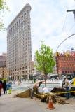 Piantagione di alberi di NYC Fotografie Stock