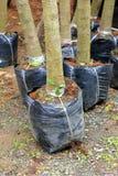 Piantagione di alberi per il giardino immagini stock libere da diritti