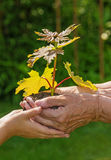Piantagione di alberi - un concetto di ecologia fotografia stock