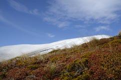 Piantagione di arbusti della montagna Immagini Stock Libere da Diritti
