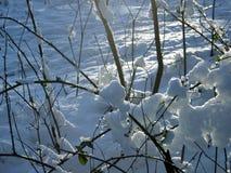 Piantagione di arbusti nevicata fotografie stock libere da diritti