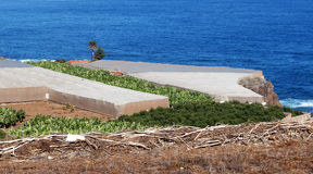 Piantagione di banana con il mare Immagine Stock Libera da Diritti