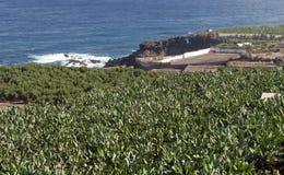 Piantagione di banana con il mare Immagini Stock Libere da Diritti