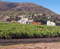 Piantagione di banana con il mare Fotografie Stock Libere da Diritti
