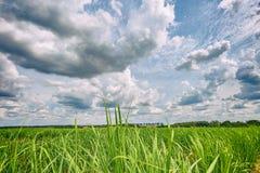 Piantagione di canna da zucchero e cielo nuvoloso - coutryside del Brasile Immagini Stock Libere da Diritti
