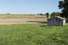 Piantagione di cereale maturo Fotografia Stock Libera da Diritti