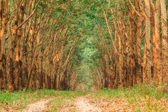 Piantagione di gomma in Tailandia Immagini Stock Libere da Diritti