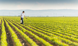 Piantagione di spruzzatura della soia del giovane agricoltore con l'antiparassitario Immagini Stock