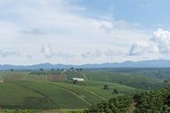 Piantagione di tè in Bao Loc, Lam Dong, Vietnam Fotografie Stock