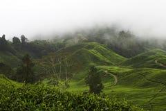 Piantagione di tè degli altopiani di Cameron Fotografia Stock Libera da Diritti