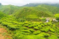 Piantagione di tè di Bharat Fotografie Stock
