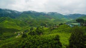 Piantagione di tè di BOH in Cameron Highland Fotografie Stock Libere da Diritti