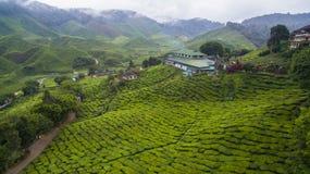 Piantagione di tè di BOH in Cameron Highland Immagini Stock Libere da Diritti
