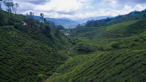 Piantagione di tè di BOH in Cameron Highland fotografie stock