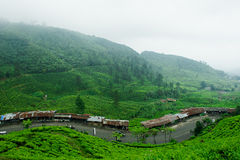 Piantagione di tè di Puncak Fotografia Stock