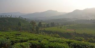 Piantagione di tè di Wayanad Fotografia Stock