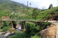 Piantagione di tè e del ponte Immagine Stock