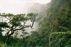 Piantagione di tè e della nebbia nell'estremità dei mondi Fotografie Stock