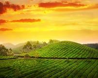 Piantagione di tè in Munnar Fotografia Stock