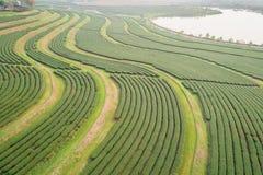 Piantagione di tè nel Nord della Tailandia Vista aerea dal dro di volo Immagine Stock Libera da Diritti
