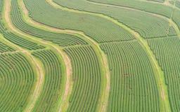 Piantagione di tè nel Nord della Tailandia Vista aerea dal volo Fotografia Stock