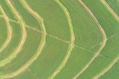Piantagione di tè nel Nord della Tailandia Vista aerea dal volo Immagini Stock