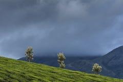 Piantagione di tè nella stazione della collina di Munnar Fotografia Stock