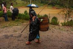 Piantagione di tè nello Sri Lanka, Nowember 2011 Immagine Stock Libera da Diritti
