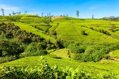 Piantagione di tè di Nuwara Eliya Fotografia Stock Libera da Diritti