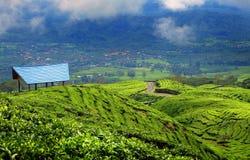 Piantagione di tè in Pagar Alam East Sumatera Indonesia immagine stock libera da diritti
