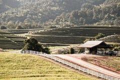 Piantagione di tè sulla collina con un cottage d'annata Immagine Stock