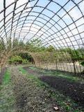 Piantagione di verdure Immagini Stock Libere da Diritti