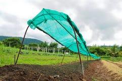 Piantagione di verdure in Tailandia Immagini Stock Libere da Diritti