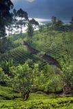 Piantagione e lago di tè Fotografia Stock