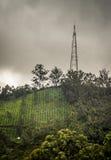 Piantagione e torre di tè della montagna Fotografia Stock Libera da Diritti