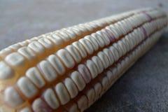 Piantagione indigena del cereale che ha un impatto di povertà sulle povere vicinanze a Belize che causa il cuoco di sviluppo agri Immagine Stock