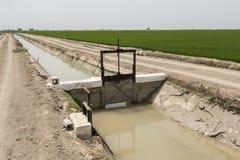 Piantagione irrigata del riso Immagini Stock Libere da Diritti