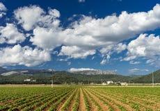 piantagione in Mallorca Fotografia Stock
